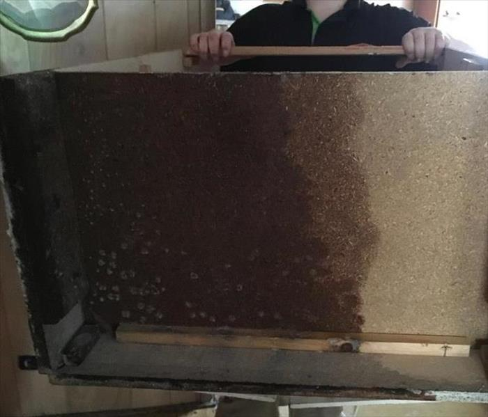 Mold Remediation Mold can be found in unimaginable places